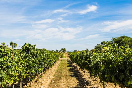"Weinprobe mit der ""Masseria di Majo Norante"""